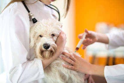 獣医学共用試験が始まっています!