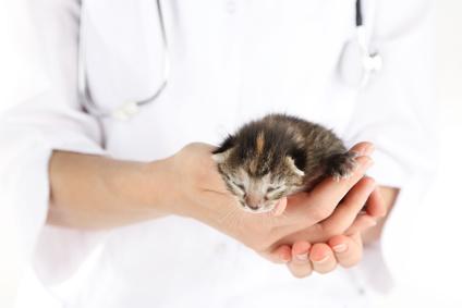 入社一年目の動物病院スタッフに伝えたいメッセージ
