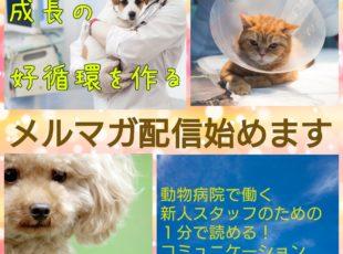新人獣医師や動物看護師向け限定!メルマガ開始